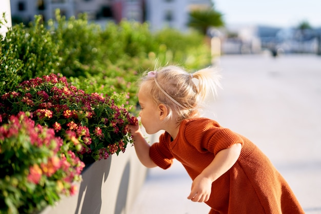 Little girl is smelling red flowers in a park on a sunny day.