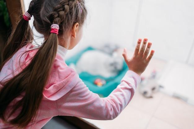 小さな女の子がペットショップで猫を見ています。子供はペットショップで子猫を選び、家畜の世話をします
