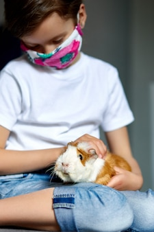 Little girl in mask playing with red guinea pig, cavy at home at sofa while in quarantine.