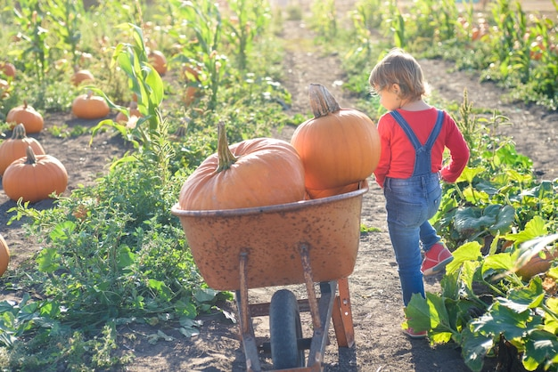 Little girl near cart with pumpkins at farm field patch