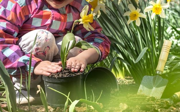 庭に花を植える少女