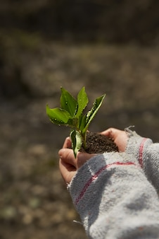 Little girl planting young tree, concept save world . young plant in hands outdoors. ecology concept