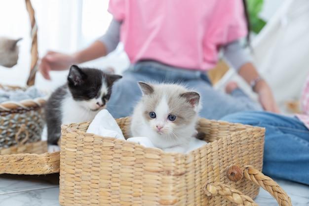 집, 우정 개념 나무 바구니에 고양이와 놀고 어린 소녀.