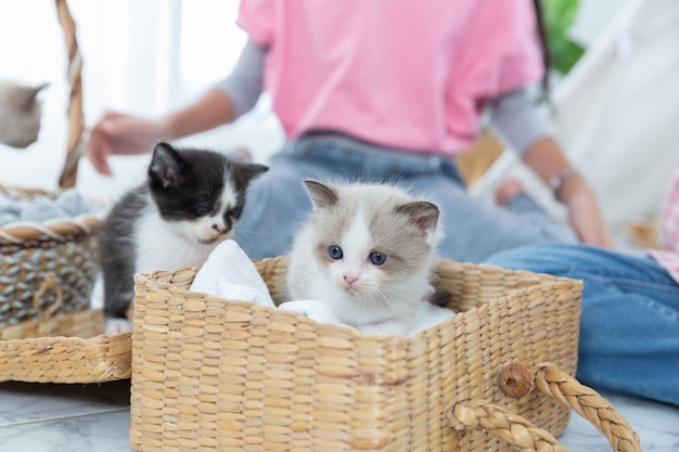 Little girl playing with cat in the wooden basket at home,friendship concept.