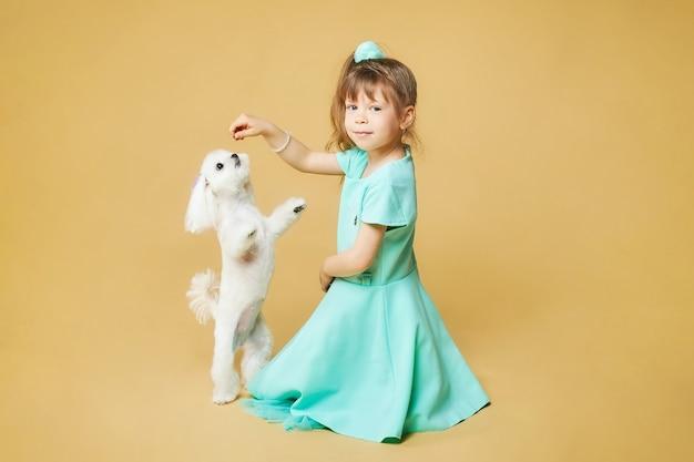 어린 소녀는 바닥에 앉아 손에 미끼를 들고, 그녀 앞에는 뒷다리에 말티즈 무릎 개가 서 있습니다. 노란색 배경에 스튜디오에서 사진 촬영.