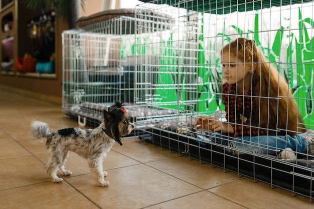大きなケージ、ペット ショップに座っている小さな女の子。ペットショップで子供を買う道具、家畜のアクセサリー