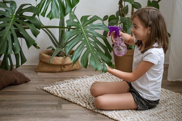 어린 소녀는 식물 몬스테라를 돌보며 관엽식물 잎을 살포합니다.