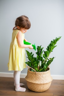 Little girl spraying the plant zamioculcas with a sprayer