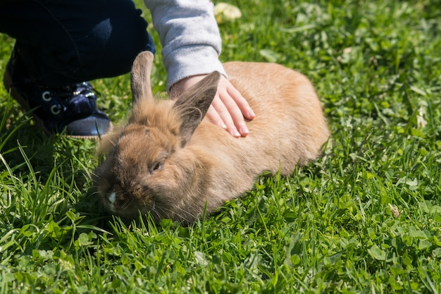 Little girl strocking brown rabbit outdoors