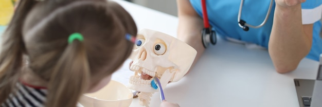 Маленькая девочка вместе со стоматологом учится правильно чистить зубы на скелете