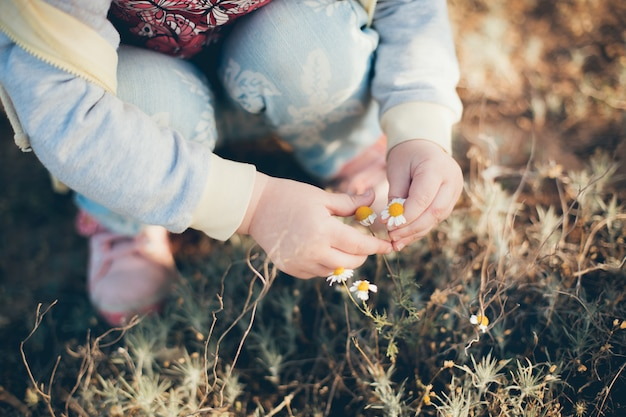 Little girl touches the daisies in the field in spring