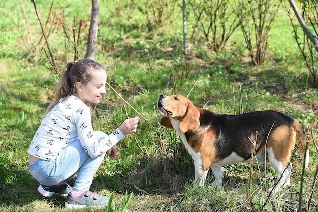 Маленькая девочка тренирует собаку на летней природе. детская игра с домашним животным другом в солнечный день. малыш с биглем на свежем воздухе на открытом воздухе. детство и дружба. концепция обучения собак.