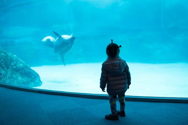 어린 소녀는 일본 나고야 수족관에서 바다 돌고래가 수영하고 서로 노는 것을 지켜보고 있습니다. 해양 생물 놀이 동물원을 방문하는 어린이 활동.
