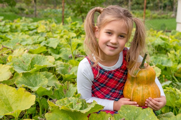 플란넬 드레스를 입고 농장 필드에 앉아있는 동안 호박을 들고 어린 소녀