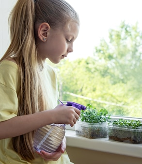 A little girl at the window watches how microgreen grow