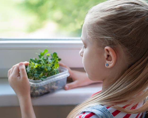 A little girl at the window watches how microgreen peas grow Premium Photo