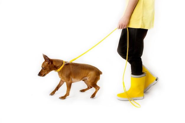 犬、黒と黄色の服を着た少女。白色の背景。スタジオ撮影。赤ちゃんペットのコンセプト、幸せな子供時代。高品質の写真