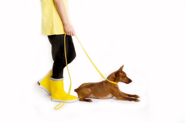 彼女の犬、黒と黄色の服を着た少女。白色の背景。スタジオ撮影。赤ちゃんペットのコンセプト。高品質の写真