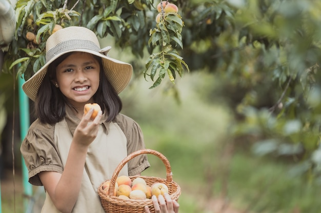 Little girl working picking peaches