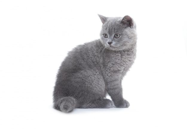 작은 회색 고양이