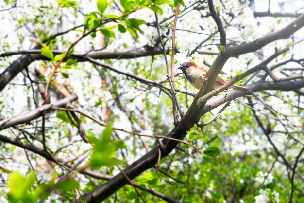 木の都市の鳥のクローズアップの枝に小さな灰色のスズメ