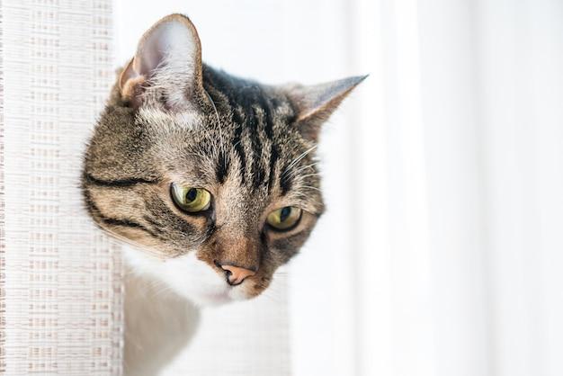 작은 회색 줄무늬와 호기심 많은 고양이