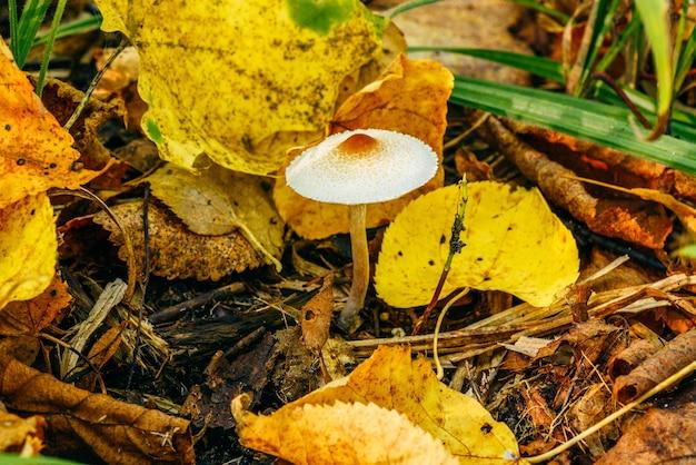 가을 숲의 노란 잎 사이에서 작은 농 병아리.