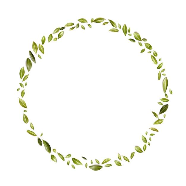 작은 녹색 잎에 고립 된 흰색 배경. 녹색 잎은 원의 형태로 구성됩니다. 플랫 레이