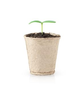 白い背景で隔離の鍋で育つ小さな緑の苗