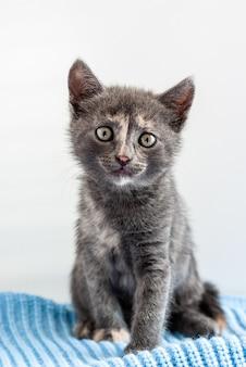 Маленький серый котенок сидит на синем трикотажном полотне и смотрит прямо в камеру