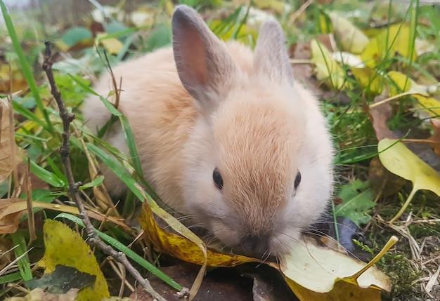草の上に座っている小さな灰色のウサギ
