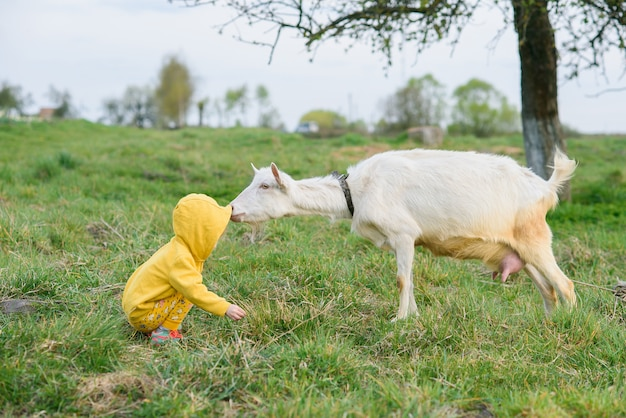 Маленькая счастливая девушка в желтых одеждах подавая с травой коза на луге.