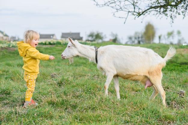 牧草地でヤギを草で食べて黄色の服で幸せな少女。