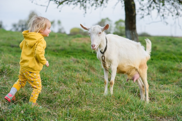 Little happy girl in yellow clothes feeding with grass a goat at meadow.