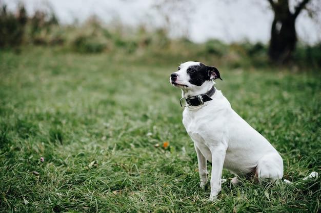 自然で緑の草に夏に屋外で遊んで幸せな子犬。