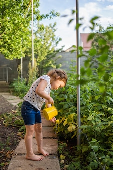 A little helper in the garden watering raspberry bushes with a yellow watering can at sunset