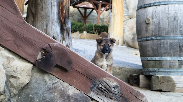 村の家の近くの階段にいる小さなホームレスの子犬。少しおかしな犬が家を守っています。