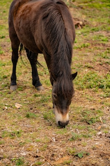 ファームの小さな馬