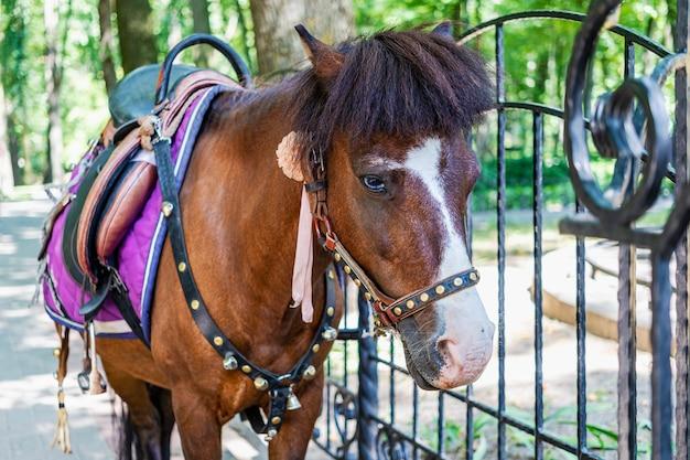 小さな馬-公園でポニーをフルに活用。ペット。閉じる。