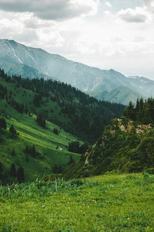 Хижина в лесу горы