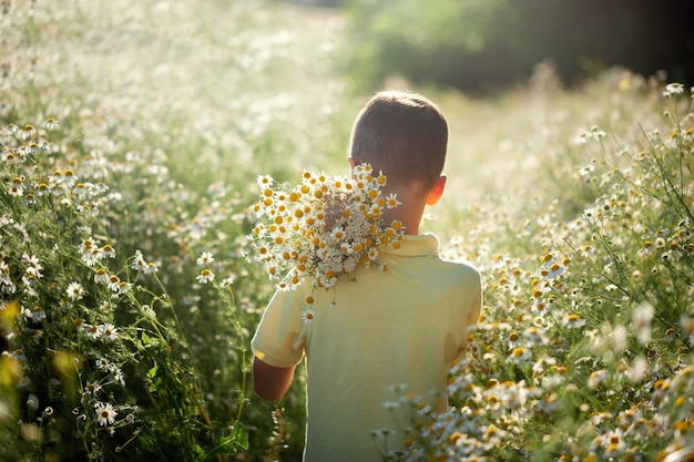 Little kid boy holding bouquet of fields camomile flowers in summer day.