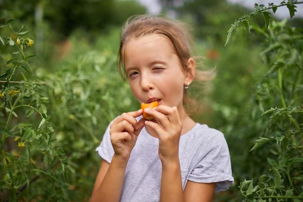 Маленькая девочка ест и наслаждается вкусным урожаем органических красных помидоров