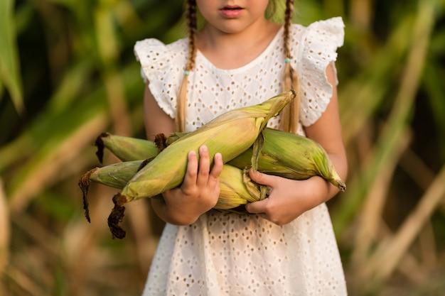 Little kid holding hands fresh corncobs outdoor