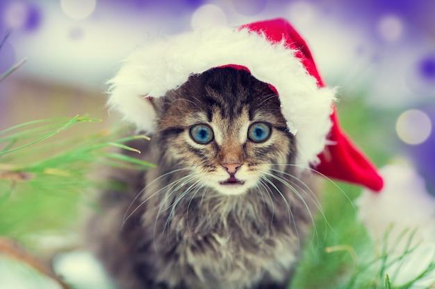 Маленький котенок в шапке деда мороза рядом с елкой