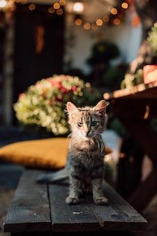 小さな子猫は秋の庭の黄色い枕の上に横たわっています