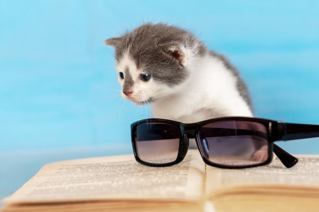 開いた本の近くの小さな子猫。本の近くの眼鏡