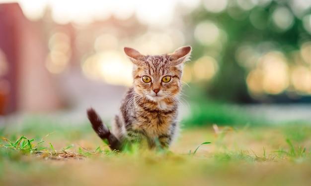 야외에서 작은 새끼 고양이
