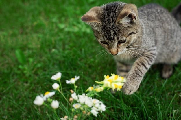 花と草で遊ぶ子猫