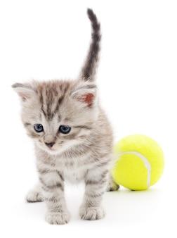 Маленький котенок играет с мячом