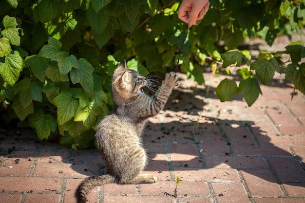 Маленький котенок играет с пером во дворе